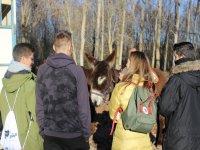Junto a los burros en la granja escuela