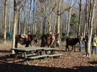Paseo en burro por el campo