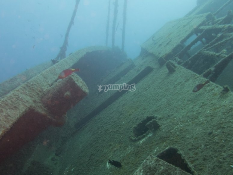 Dive next to wrecked ship