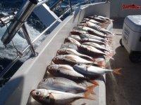 los peces del dia