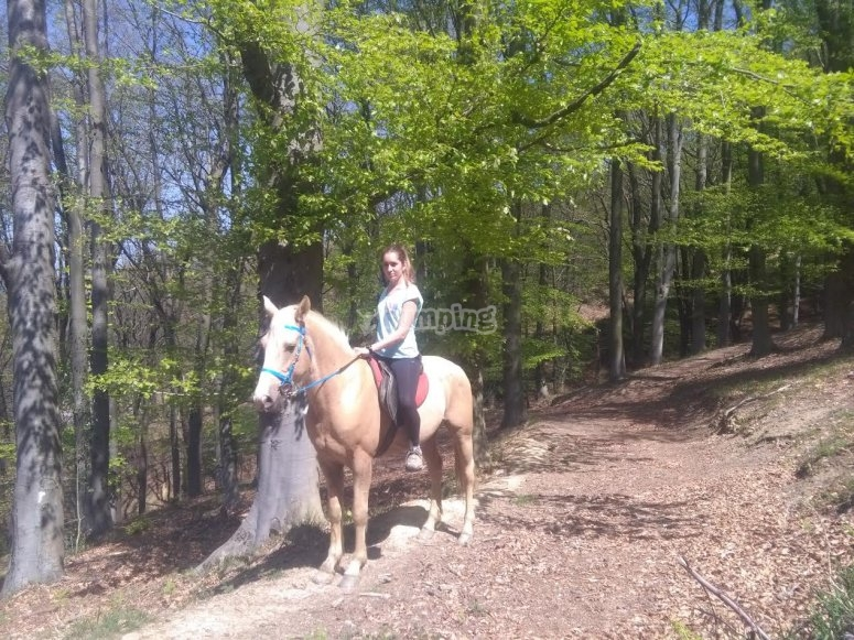 Rider by horse in the trail