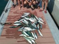 Bella pesca per 4 ore a L'ametlla