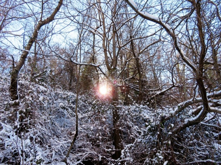 primeras nieves en la vereda