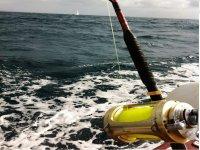 钓鱼竿船上的鱼