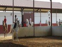 Ninos montando a caballo