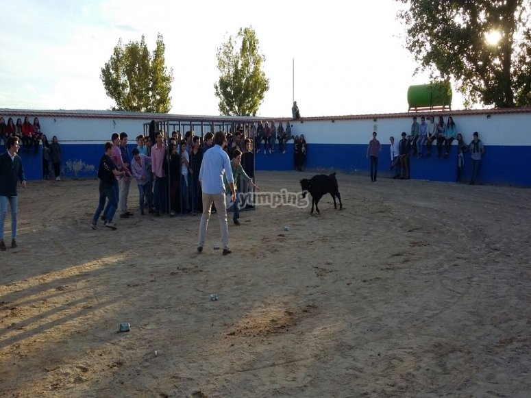 plaza y vaca