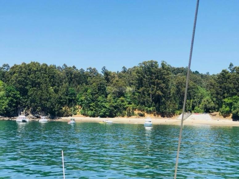 Arboles en la costa de A Coruna