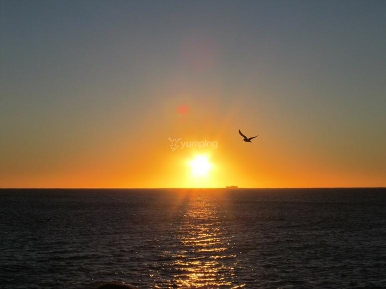 puesta de sol y gaviota