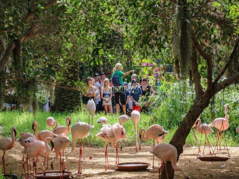 Flamingos activity
