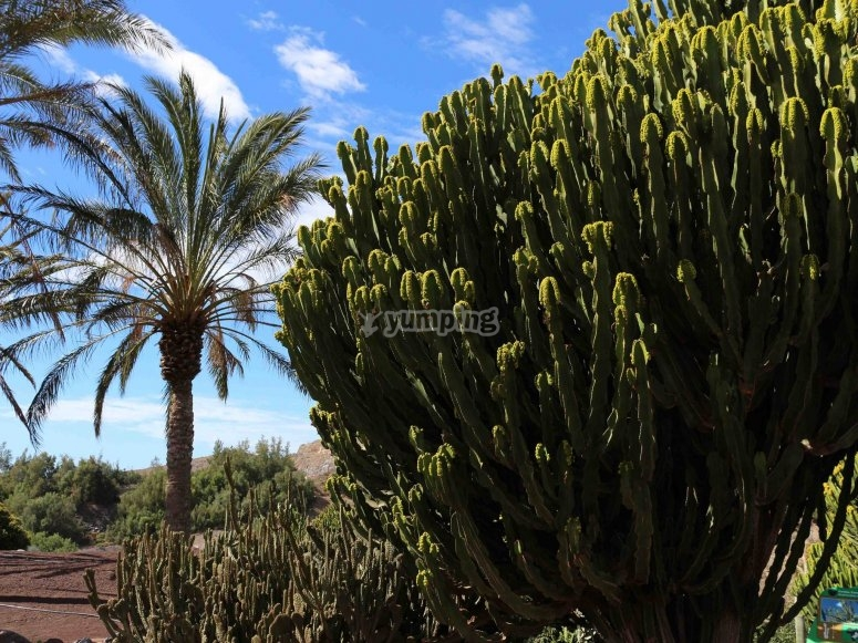 Botanical garden Fuerteventura