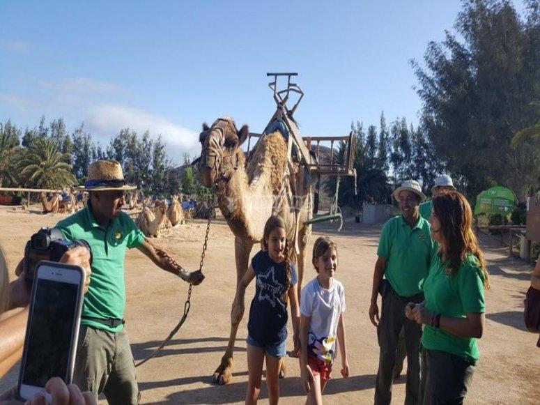 promenade de chameau