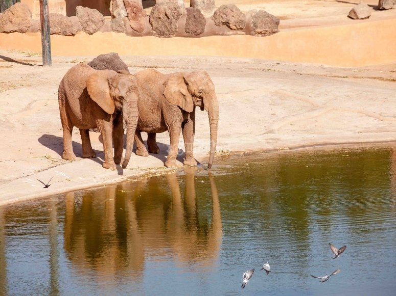Elephants in the pond