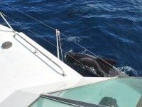 la orca nada a nuestro lado