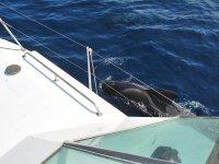 delfin siguiendo el barco