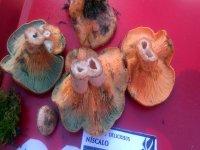 Micología en Cuenca