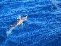 nos visita un delfin