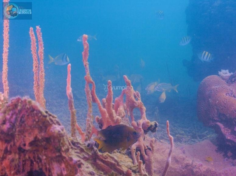 您会发现令人印象深刻的海底