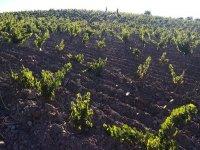 Vinedos de Granada