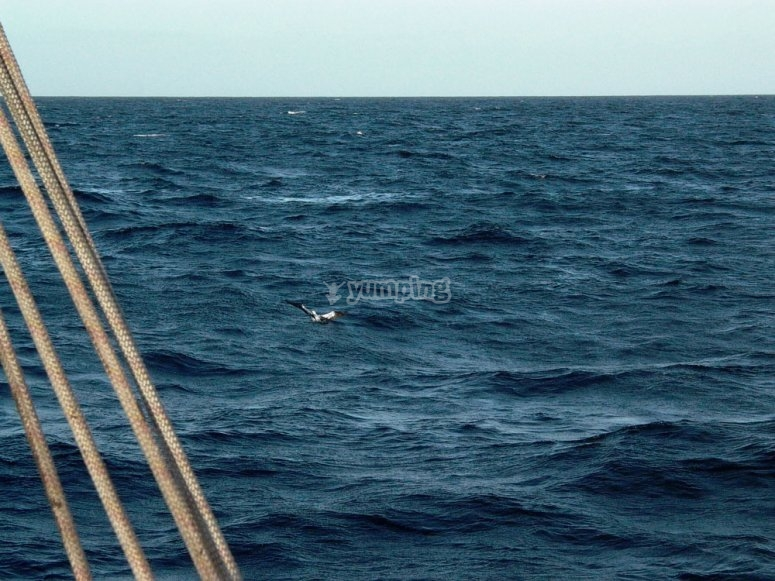 cetaceos desde el barco