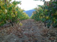Walk through the vineyard