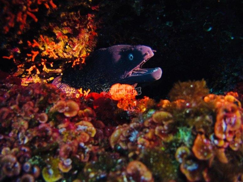 潜水员组在海底