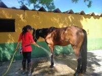 Aseando al equino en Madrid