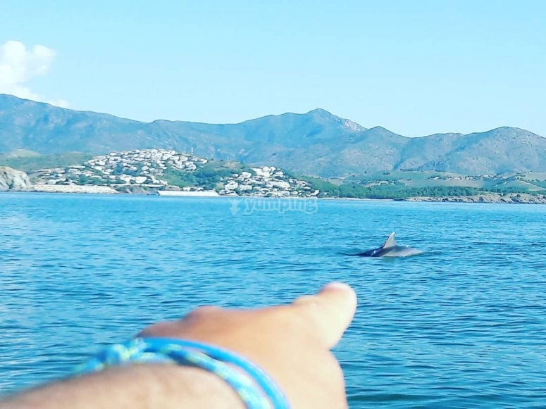 Meeting a dolphin whilst kayaking
