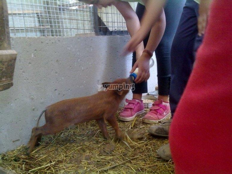 Tasks in the farm