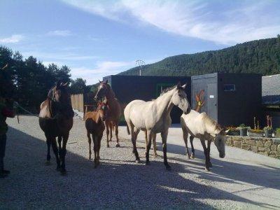 Visita a granja y paseo en poni para escolares