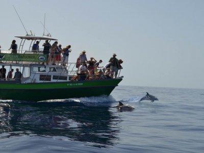 参见海豚Tazacorte儿童港口3小时