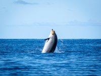 Dolphins Watching, Tazacorte Port, Children, 3h