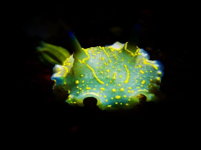 在Tramuntana海下--999-马略卡岛的海洋植被