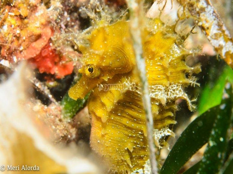 El fondo marino de Gerona