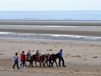 Donkey ride and zodiac transfer La Flecha beach