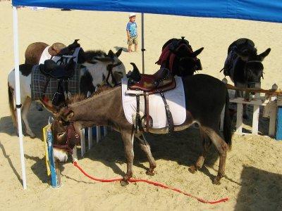 骑在El Rompido海滩和黄道带儿童的驴