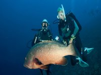 Testigo de una fauna marina impresionante