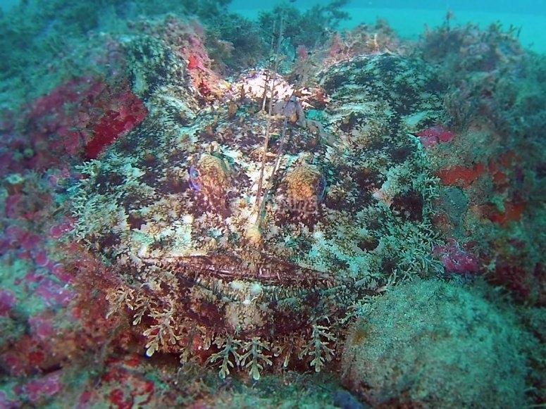 grupo de buceo profundo