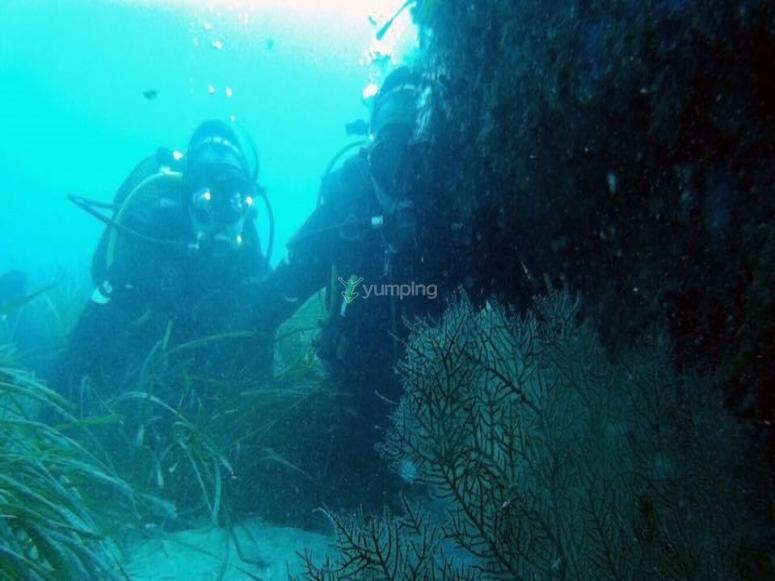 Curso de buceo para descubrir el fondo del mar