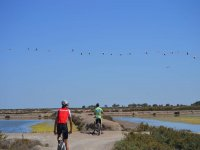 Routes through doñana