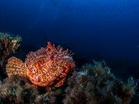 Especies marinas que no conocias