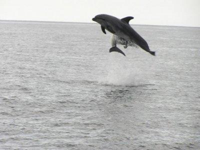 Tenerife Parascending Avistamiento de Cetáceos