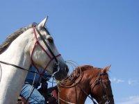 Disfruta montando a caballo