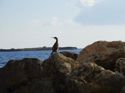 Marcabrera Ornitología