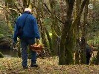 en medio del bosque recogiendo setas