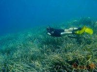 Buceando sobre la vegetacion marina