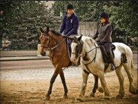 2015年马放牧