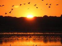 Atardecer en zona de aves
