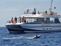 Avistamiento de cetaceos desde el Spirit of the sea