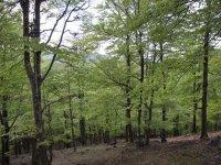 Frondosos bosques en Navarra
