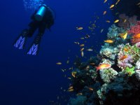 Introduction to diving in Pontevedra